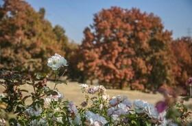 تماشای پاییز در پارکهای کرج