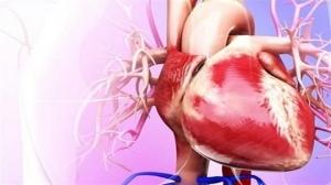 یا چربی دور قلب ارتباطی با چاقی و لاغری افراد دارد؟